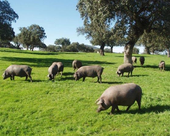 gastronomia porcina