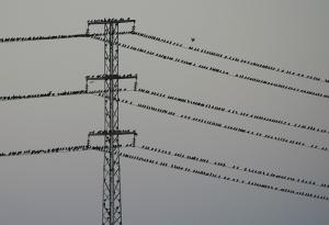 pajaros en cables