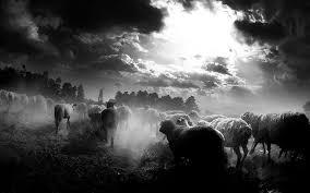 noche de lobos